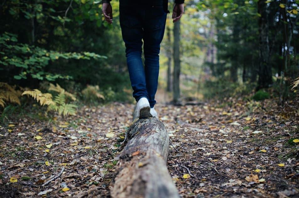 Randonnée en forêt de Chalamont