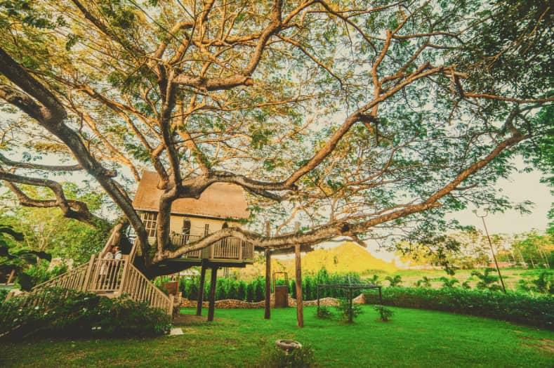 Cabane dans les arbres au Camping de la Dombes